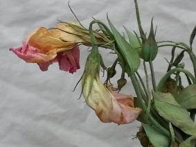 dead flowers1