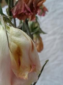 dead flowers5