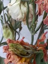 dead-flowers6