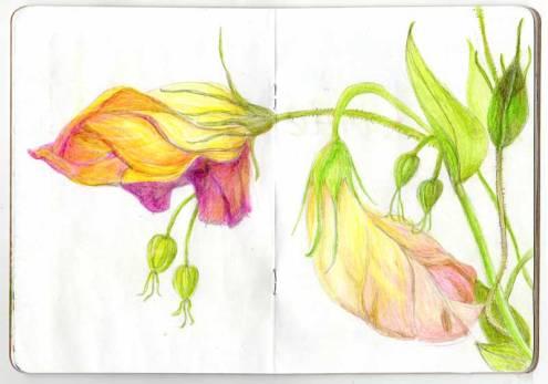 Flower-drawing-AA